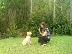 Private & Group Dog Training