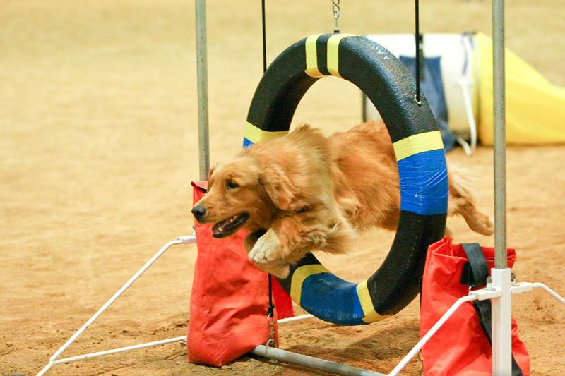 Far Fetched Tales Dog Training