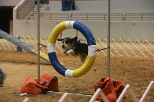 First AKC Agility Trial