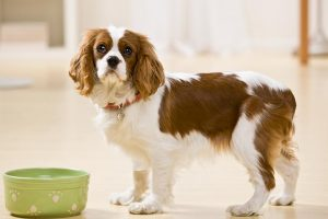 Changing Your Dog's Food